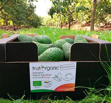 http://www.frutorganic.com/wp-content/uploads/2017/10/agu19kg.jpg